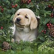 Christmas Puppy Poster