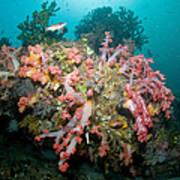 Colorful Reef Scene, Komodo, Indonesia Poster