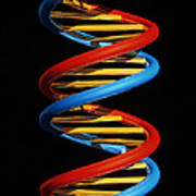 Computer Artwork Of Part Of A Beta Dna Molecule Poster