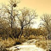 Desert Trail Poster