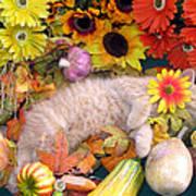 Di Milo - Flower Child - Kitty Cat Kitten Sleeping In Fall Autumn Harvest Poster