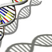 Dna Molecule Poster