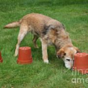Dog Playing Poster