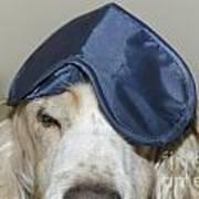 Dog With A Sleep Mask Poster