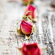 Dried Rose Buds Poster