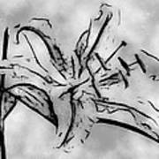 Exotic Lily In Black And White Poster