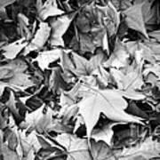 Fallen Leaves Poster