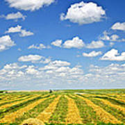 Farm Field At Harvest In Saskatchewan Poster
