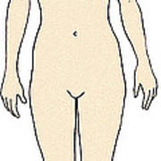 Female, Full Anterior View Poster