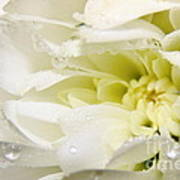 Fleur Blanche Poster