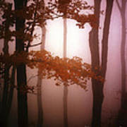 Foggy Misty Trees Poster