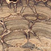 Fossil Stromatolite Poster