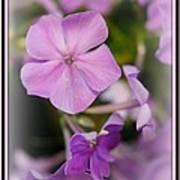 Fragrance  Poster