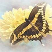 Grunge Giant Swallowtail Poster