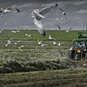 Gull Chased Tractor Poster