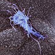Hela Cell, Sem Poster by
