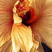 Hibiscus Interior Poster