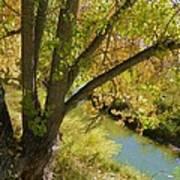 Hidden Creek Poster