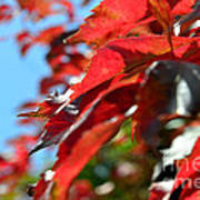 Hot Autumn Leaves Poster