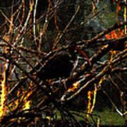 Ibis At Dusk Poster