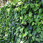Ivy Wall Poster