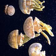 Jellyfish 3 Poster