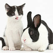 Kitten And Dutch Rabbit Poster