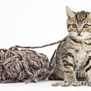 Kitten With Yarn Poster