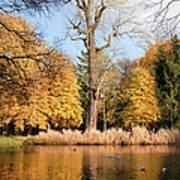 Lazienki Park Autumn Scenery Poster
