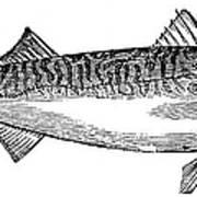Mackerel Poster