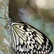 Magical Butterfly Poster