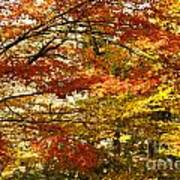 Maple Tree Foliage Poster