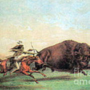 Native American Indian Buffalo Hunting Poster