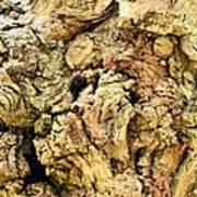 Natural Abstract 44 Poster