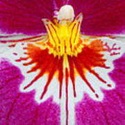 Orchid Closeup Poster