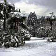 Palm Trees With Snow Poster