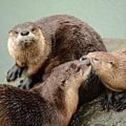 Pelican Creek Otter Family Poster