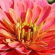 Petals Of Pink Poster