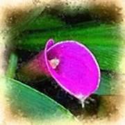 Pink Calla Poster