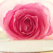 Pink Rose And Teacup Poster
