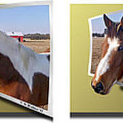 Pony Pose - Gently Cross Your Eyes And Focus On The Middle Image Poster
