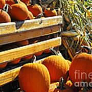 Pumpkins Poster by Elena Elisseeva