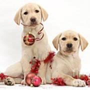 Puppies At Christmas Poster