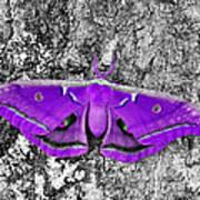 Purple Polyphemus Poster
