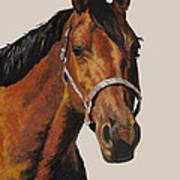 Quarter Horse Poster by Ann Marie Chaffin