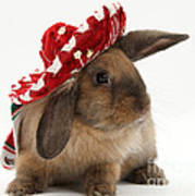 Rabbit Wearing A Hat Poster