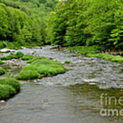 Rainy Day On Williams River Poster