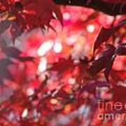 Red Leaves 3 Poster