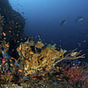 Reef Scene With Coral And Fish Poster