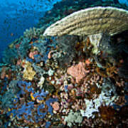 Reef Scene With Corals And Fish Poster
